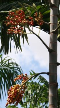 und jetzt wollen wir uns den Tropical Garden mal genauer ansehen...