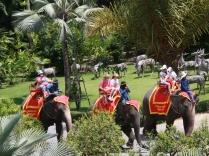 echte Elefanten laufen auch ab und zu vorbei...