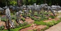 ein paar Zebras