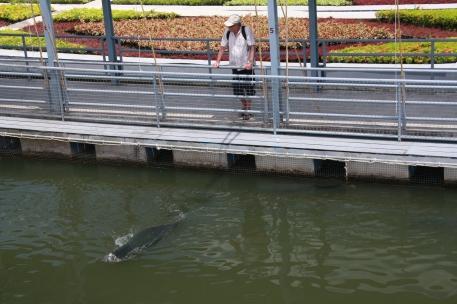 ein paar echte Tier gab es auch: das waren mal Fische...