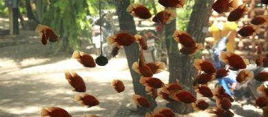 fliegende Fische?
