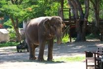 Elefanten sind immer in der Nähe!