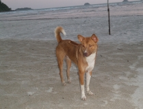 Strand-Hunde gibt es viele, super-süß