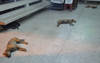 die Hunde sind hier cooler als bei uns - wenn müde, dann hinlegen, egal wo