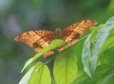 sehr schön, der Butterfly-Park