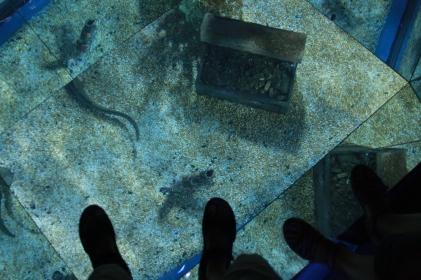 sehr cool - Fußbodenaquarium