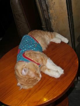Die beste Katze - gehört zu einer besonderen Kneipe (ist so eine Art Tamagotchi, wenn man sie streichelt, fängt sie an zu schnurren) / jeder Tisch bekommt so eine Katze... strange, aber sehr lustig