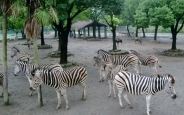 Zoo Shanghai