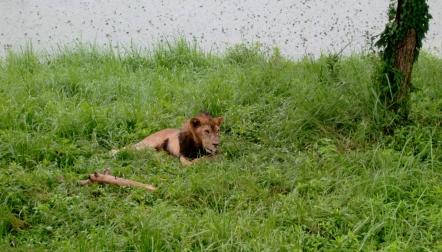 Löwe war auch da