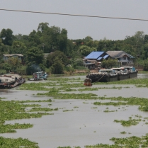 Fluss mit riesigen Mengen schwimmendem Grünzeug
