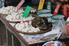 """Oder eine Katze hier """"Katze an Ei"""""""
