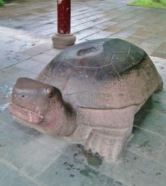 Schildkröten brachten schon immer Glück