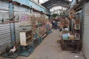 """etwas grauer auf dem """"Insects and Birds Market"""""""