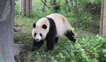 da muss es doch mehr Bambus geben, irgendwo!?