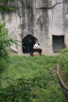 das ist der Papa-Panda