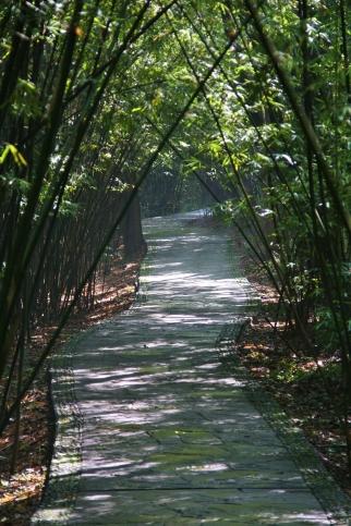 Sehr nettes Environment - Bambus überall (das mag der Panda am liebsten)