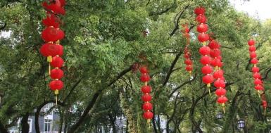 Der Nationalfeiertag steht an - Bäume und die Stadt werden geschmückt