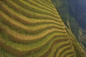 Longji (Dragon's Backbone) Terraced Rice Fields- andere Perspektive