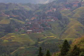 Longji (Dragon's Backbone) Terraced Rice Fields