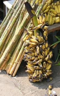 Bananen - überall zu haben