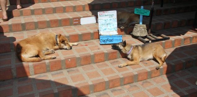 die Hunde helfen mit bei der Geldbeschaffung