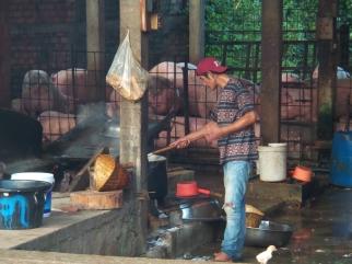 direkt nebenan wurden während unseres Poolaufenthalts übrigens vier Schweine geschlachtet (heftiges Spektakel...)