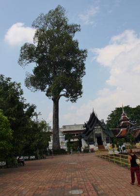 beachtliche Bäume auf dem Gelände