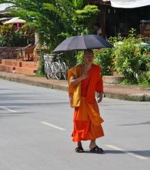 auch den Mönchen wird es um die Mittagszeit zu warm in der Sonne