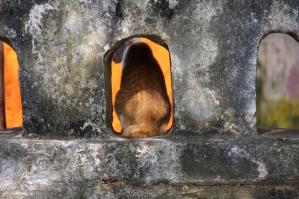 die Katze schaut sich das auch an - und hofft, was abzubekommen (und das klappt immer - hier hat jeder für jeden was zum Essen übrig)