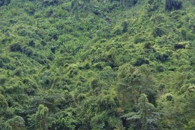 Laotischer Dschungel, er umsäumt den Mekong