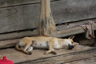 Hund - bewacht Fischernetz