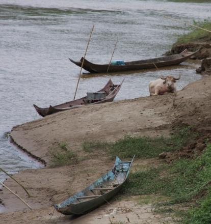 Fluss-Romantik (mit Wasserbüffel)