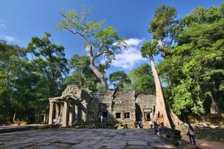Ta Prohm: Bäume spielen eine große Rolle an den Tempel