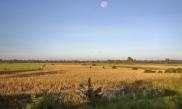 Reisfelder - davon gibt es undendlich viele