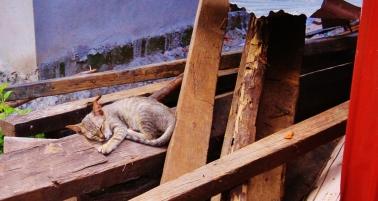 dies Kätzchen konnte ich sehr gut erwischen - es schlief brav weiter...