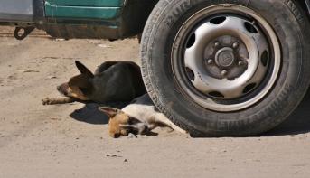 Keine Sorge, dem Hund geht es gut - er schläft (wie so viele andere Hunde auch) an den bemerkenswertesten Plätzen