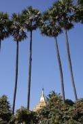 Es wechseln sich Stupas, Palmen und blauer Himmel ab mit der sonstigen Realität auf den Straßen