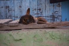 Der war besonders niedlich und schlief so tief und friedlich
