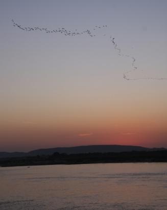 ... und dann kamen auch noch Zugvögel...