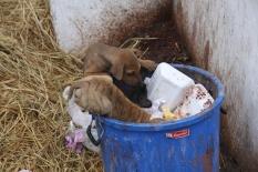 Auch die Hunde haben es nicht so leicht - die meisten wachsen wild auf und müssen sich selbst um das Futter kümmern