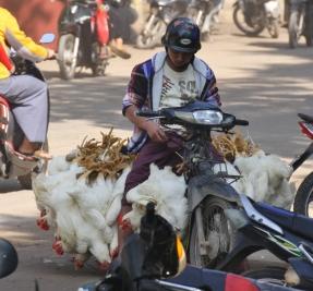 Hühner werden anders angeliefert, als wir das kennen