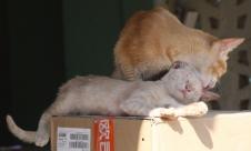 Genießer-Katze