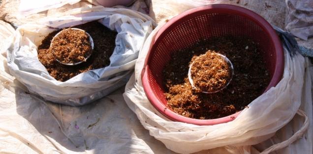 Ameisen - lecker (?)