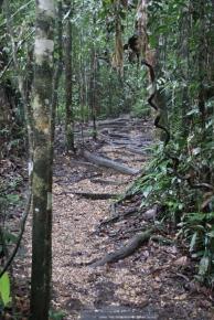 Auf dem Weg zu den Orang Utans