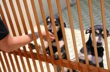 """""""unsere"""" beiden Hunde von nebenan - jeden Tag gab es Streicheleinheiten ... so oft wir konnten"""
