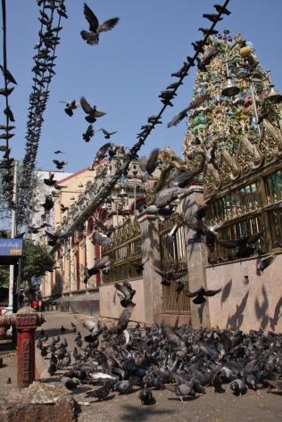 auch in Rangun ist Taubenfüttern angesagt