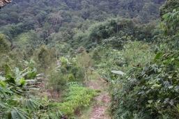 Unser Trip in den Dschungel von Borneo: Wirklich coole Aktion, sehr warm, total anstrengend aber völlig außergewöhnlich - ganz prima!