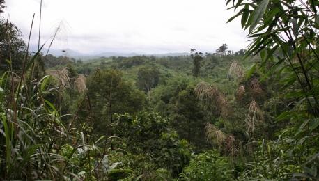 Blick über den Dschungel 50 Kilometer südlich von Kuching