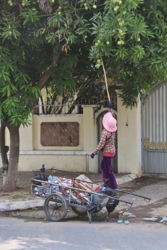 Mangos wachsen überall - die Saison beginnt gerade