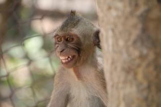 viele Affen